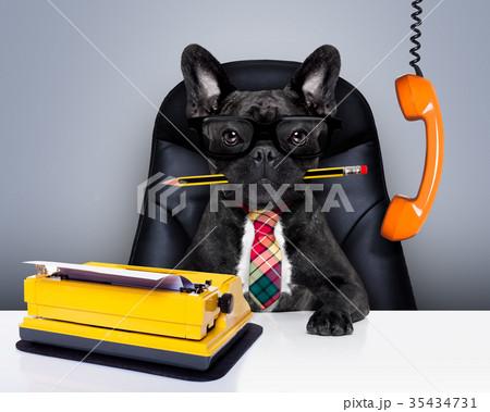 office worker boss dogの写真素材 [35434731] - PIXTA
