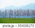 防風林 畑 十勝の写真 35438173
