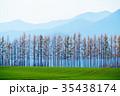 防風林 畑 十勝の写真 35438174