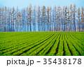 防風林 畑 十勝の写真 35438178
