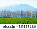 防風林 畑 十勝の写真 35438180