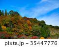 紅葉 秋 風景の写真 35447776
