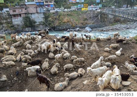 インド マナリーの街並みと羊と...