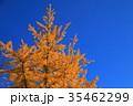 紅葉 もみじ 秋の写真 35462299