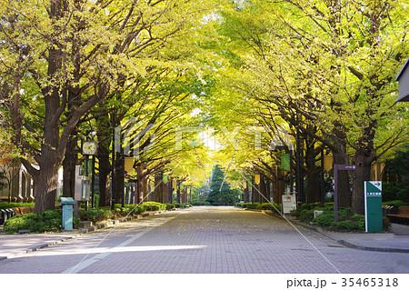 紅葉が始まった無人の青山学院大学正門のイチョウ並木 35465318