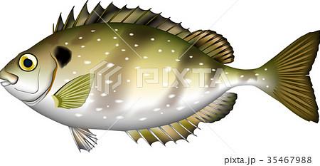 魚イラスト アイゴ EPS 35467988