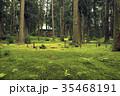 5月 緑の平泉寺白山神社(へいせんじはくさんじんじゃ) 35468191