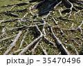 木の根 35470496
