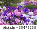 堀切菖蒲園 花菖蒲 花の写真 35472238