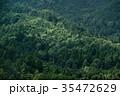 森 森林 木の写真 35472629