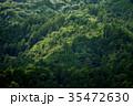 森 森林 風景の写真 35472630