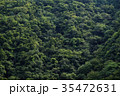 森 森林 木の写真 35472631