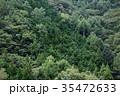 森 森林 木の写真 35472633