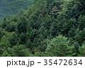 森 森林 木の写真 35472634