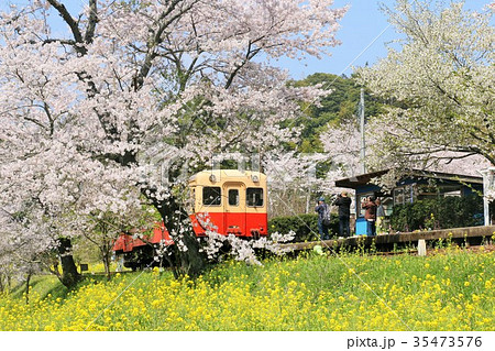 千葉県 春の小湊鉄道 35473576