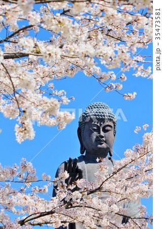 大仏と桜 35473581