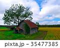 北海道 畑 十勝の写真 35477385