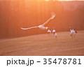 タンチョウ 鶴 朝焼けの写真 35478781