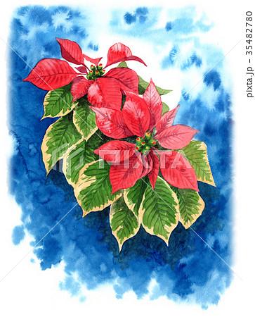 水彩で描いたポインセチア 35482780