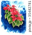 ポインセチア 植物 花のイラスト 35482781