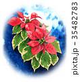 ポインセチア 植物 花のイラスト 35482783