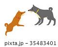 犬二匹(茶色い犬と黒い犬) 35483401