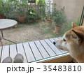 庭で日向ぼっこ 35483810