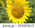 ひまわりとハチ 35483815