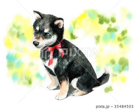 水彩で描いた黒柴の子犬 35484503