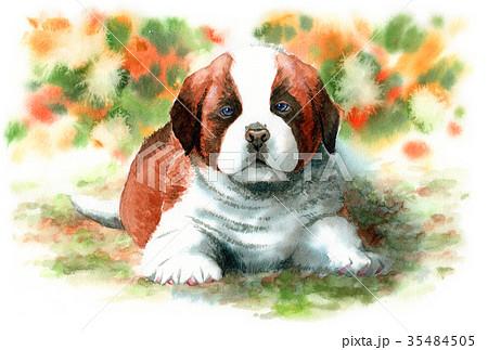 水彩で描いたセントバーナードの子犬 35484505