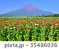 富士山 花の都公園 満開の写真 35486036