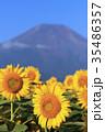 富士山 ひまわり 夏の写真 35486357
