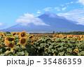 富士山 ひまわり 夏の写真 35486359