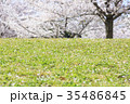 桜の木の下 35486845