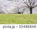 桜の木の下 35486846