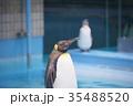 動物 王子動物園 ペンギンの写真 35488520
