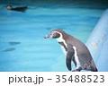 動物 王子動物園 ペンギンの写真 35488523