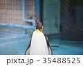 動物 王子動物園 ペンギンの写真 35488525