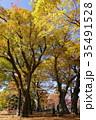 あがたの森公園 ケヤキ 黄葉の写真 35491528