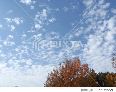 秋の谷津干潟公園の青空と白い雲 35494559
