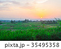 Rice field in the evening. 35495358