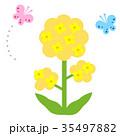 春 ベクター 花のイラスト 35497882