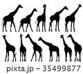 きりん キリン 麒麟のイラスト 35499877