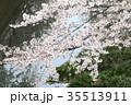 桜 ソメイヨシノ 花の写真 35513911