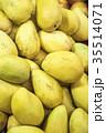 マンゴー 果物 果実の写真 35514071