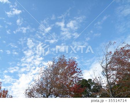 秋の谷津干潟公園の青空と白い雲 35514714