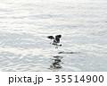 鳥 カモメ カモメの写真 35514900