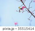 桜 さくら サクラの写真 35515414