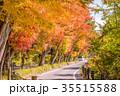 風景 秋 紅葉の写真 35515588