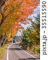 風景 秋 紅葉の写真 35515590